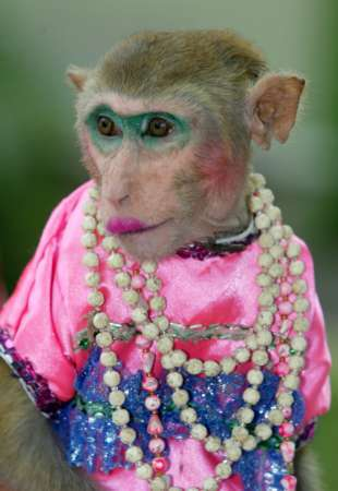 monkey in makeup