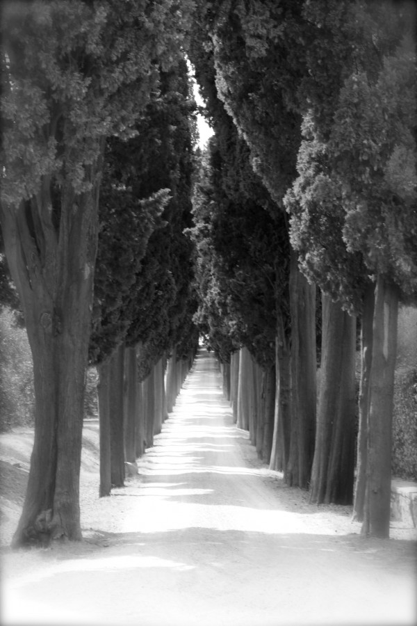 Tuscany Black & White